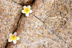 Rock Flower Composition royalty free stock images