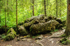 Rock in the forest Royalty Free Stock Photo