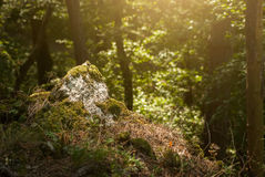 Rock on the forest. Rock on the wild forest Stock Image