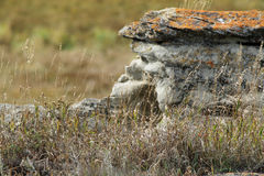 Rock form home to pika in Rockyview county Stock Photography