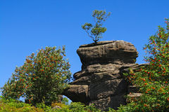 Rock Formation at Brimham Rocks, Yorkshire. Unusual rock formation with trees at Brimham Rocks, Yorkshire, England Royalty Free Stock Images