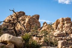 Rock Formation and Joshua Tree in Desert under Blue Sky Stock Photos