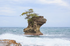 Rock formation at Manzanillo Costa Rica. Rock formation at Manzanillo beach Costa Rica caribbean coast Stock Photo