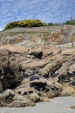Rock formation with Mussels, Brittany, France Royalty Free Stock Photo