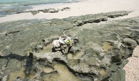Rock Formation at Mystery Island. Natural rock formation with natural pools on Pacific Ocean coast with isolated shell and apple at Mystery Island, Vanuatu Stock Images