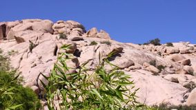Rock formation over blue sky background. Rock formations mountain at Joshua Tree National Park with tree green leaves blowing in the wind stock footage