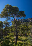 Rock formation and pine trees on the Costa Brava Royalty Free Stock Photography