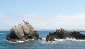 Rock formation with some birds at Seven Islands Royalty Free Stock Photos