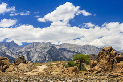 Rock formation with a tree, Alabama Hills, Sierra Nevada Royalty Free Stock Photography