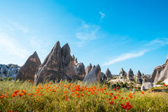 Rock formations and flowers of Cappadocia Stock Image