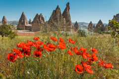 Rock formations and flowers of Cappadocia Royalty Free Stock Photography