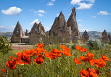 Rock formations and flowers of Cappadocia Royalty Free Stock Images