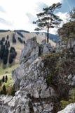 Rock formations - Haliny at Malino Brdo, Slovakia. Rock formations called Haliny at Malino Brdo, Slovakia Royalty Free Stock Photo