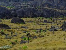Rock formations at Mount Kenya. Amazing rock formations and giant groundsels on Mount Kenya Stock Photos