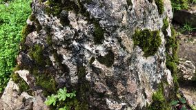 Rock with a fresh moss on nature. Close up shot of a big rock covered with moss in forest. Old and hard rock. Beautiful texture stock video