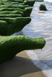 Rock  full of green seaweed Royalty Free Stock Photography