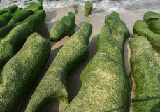 Rock  full of green seaweed Royalty Free Stock Images
