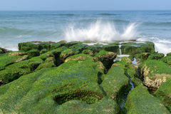 Rock  full of green seaweed Stock Photos