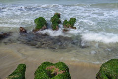 Rock  full of green seaweed Stock Photography