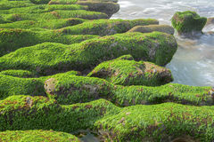 Rock  full of green seaweed Stock Images