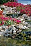 petunia rock garden with waterfalls Stock Images