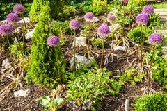 Rock garden Royalty Free Stock Photo