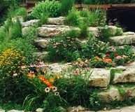 Rock Garden. Beautiful flowers surround stone bricks Royalty Free Stock Images