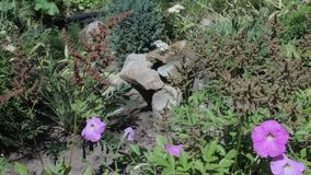 Rock garden Stock Photography