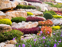 Rock garden. Royalty Free Stock Image