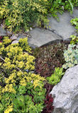 Rock garden with juniper and sedums Royalty Free Stock Photography