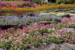Rock garden with multicolor flowers Royalty Free Stock Photos