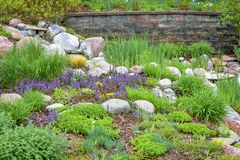 Rock Garden with Purple Flowers Royalty Free Stock Photo