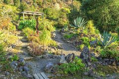 Rock garden with succulents and cacti stock photography