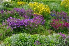 Rock garden spring flowers Stock Photos