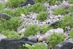 Rock Garden Royalty Free Stock Photography