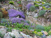 Rock garden with various flowers Stock Photo
