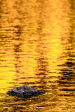 Rock and gold autumn lake reflections Stock Photos