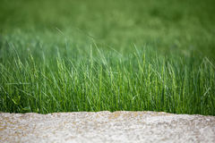 Rock and grass border Stock Images