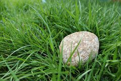 Rock. A rock in the grass at the garden Royalty Free Stock Image