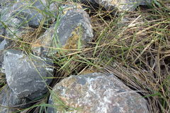 Rock and Grass Royalty Free Stock Photography