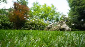 Rock in the grass. A rock laying in kept grass Stock Photos