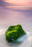 Rock with green algae in the sea at sunrise Stock Image