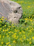 Rock in a green meadow Royalty Free Stock Images