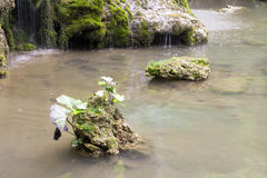 Rock and green plants in the water. Luoyang chinese chongdugou scenic area Royalty Free Stock Photography
