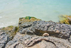 Rock with green slimy seagrass Stock Photography