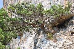 Rock and green tree Royalty Free Stock Image
