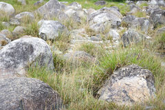 Rock with green and yellow grass in field background Royalty Free Stock Photography