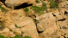 Rock and greens Stock Photography