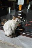 Rock guitar cat Stock Photography
