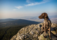 On a rock hound dog Royalty Free Stock Photography